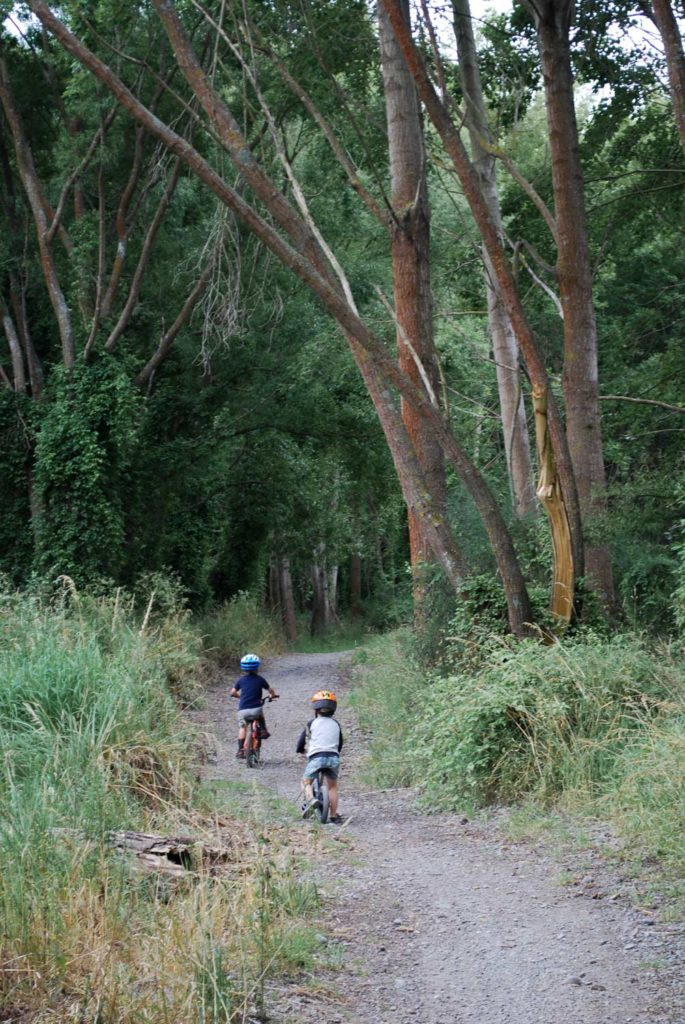 Perfect for family and young children, the Ashburton River Trail is a safe and easy bike or walk for everyone