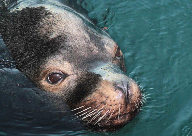 The Seal Colony is a great rest stop, just north of Kaikoura between Christchurch and Picton. Stop for a break and some free family fun
