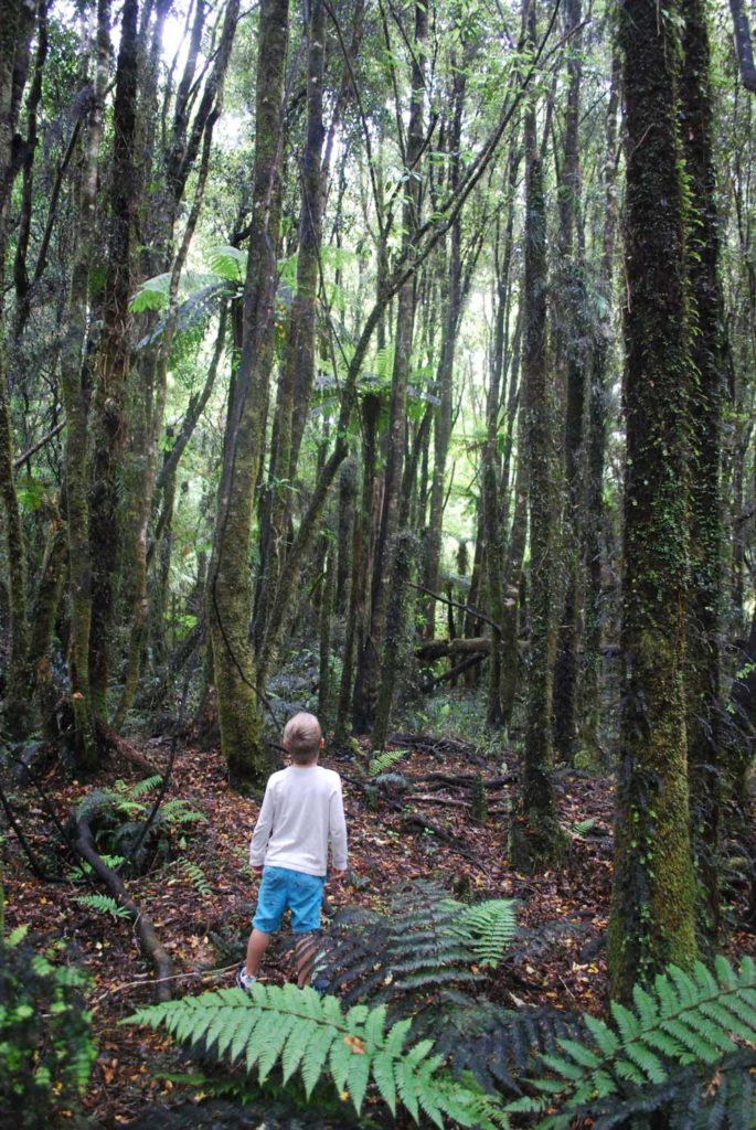 Nathan from Backyard Travel Family admires the native forest on the easy short walk to Lake Kaniere, West Coast, NZ I Backyard Travel Family