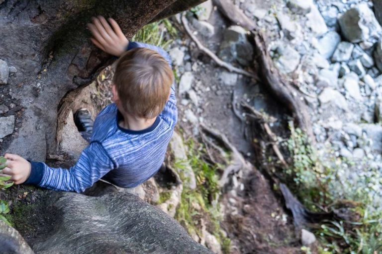 Climbing down tree trunks on Lake Marian track, a great half way walk on the Milford Road Highway, Fiordland. You can even walk to Lake Marian with kids by Backyard Travel Family