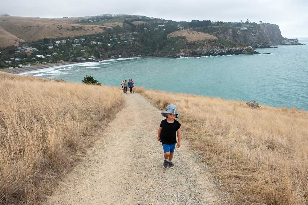 Kipton from Backyard Travel Family scales the hill overlooking Taylors Mistake, from the Godley Heads Track, Christchurch, NZ