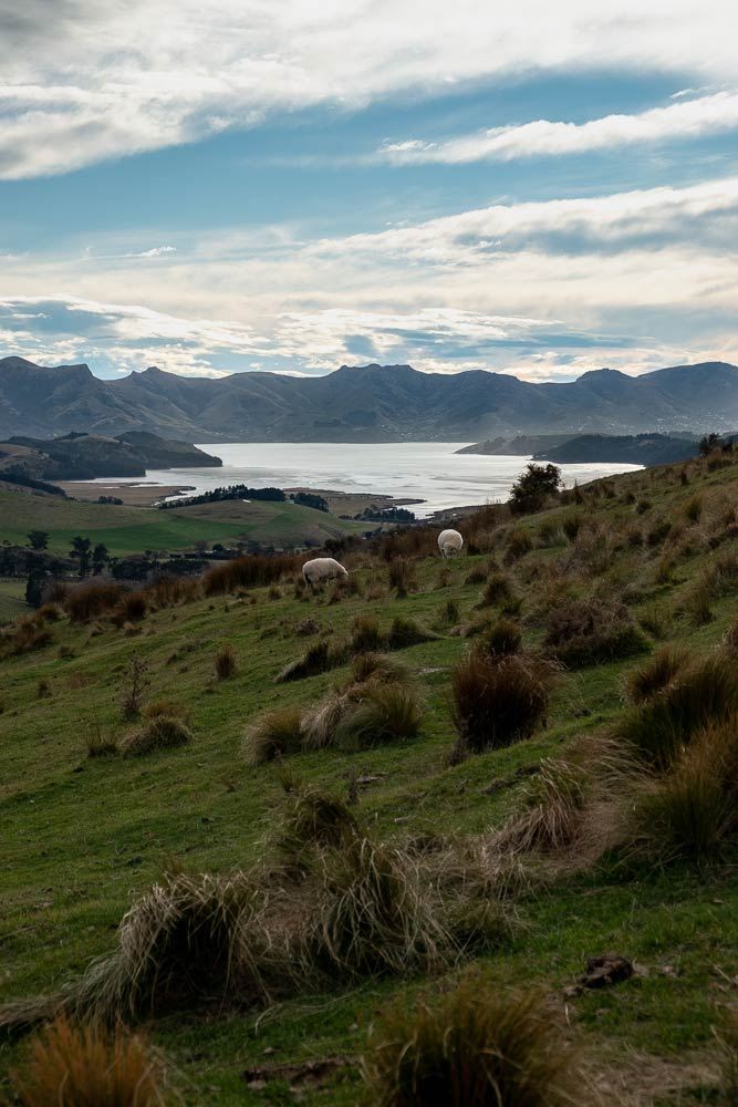 Views from Packhorse Hut Track / Best half day hike for families in Christchurch, NZ