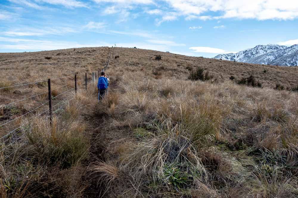 Walking through the tussock towards the mountains on the Woolshed Creek Hut track, A great walk for kids or overnight tramp for families, Mid Canterbury, New Zealand