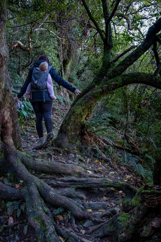 Jen backpacks 1 year old Emilia from Backyard Travel Family over the wrangly tree roots in the Awa Awa Rata Reserve at the base of Mt Hutt, Methven, NZ