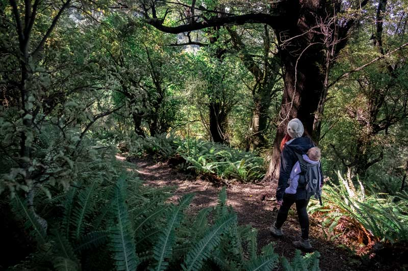 Jen from Backyard Travel Family gazes at the native flora and fauna in the Awa Awa Rata Reserve, an hour from Christchurch, New Zealand