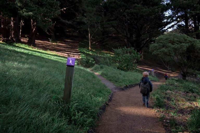 Kipton from Backyard Travel Family follows the purple markers through the bush to the Mt Victoria Summit Lookout