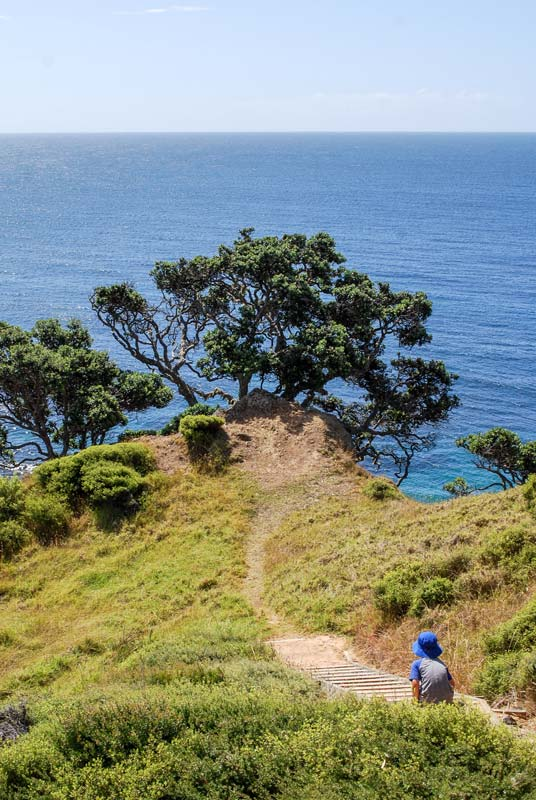 Nathan walks down the stairs on the Mahinepua Peninsula Track in Northland