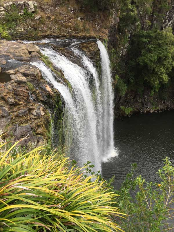 Whangarei Falls from the upper viewpoint