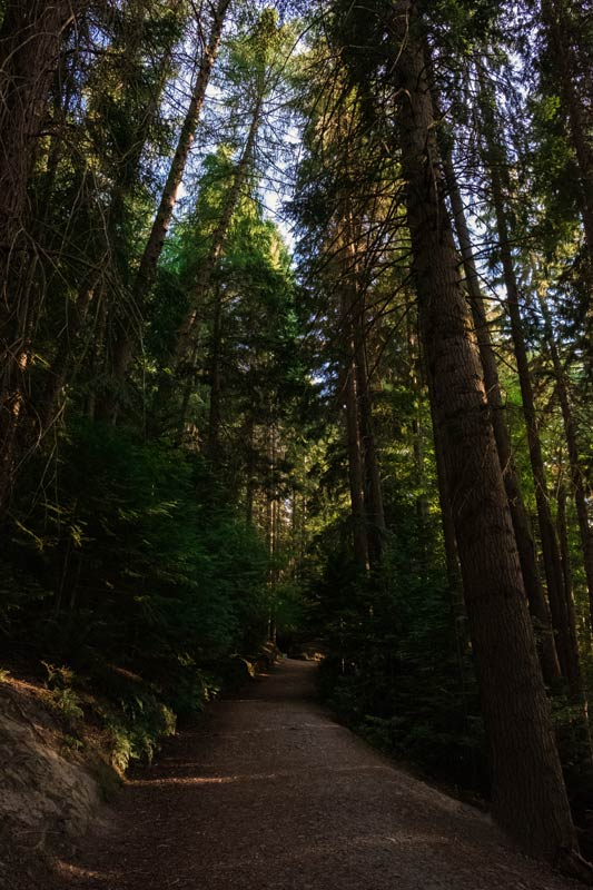 Sun streaming through the forest trees on the Conical Hill Track in Hanmer Springs