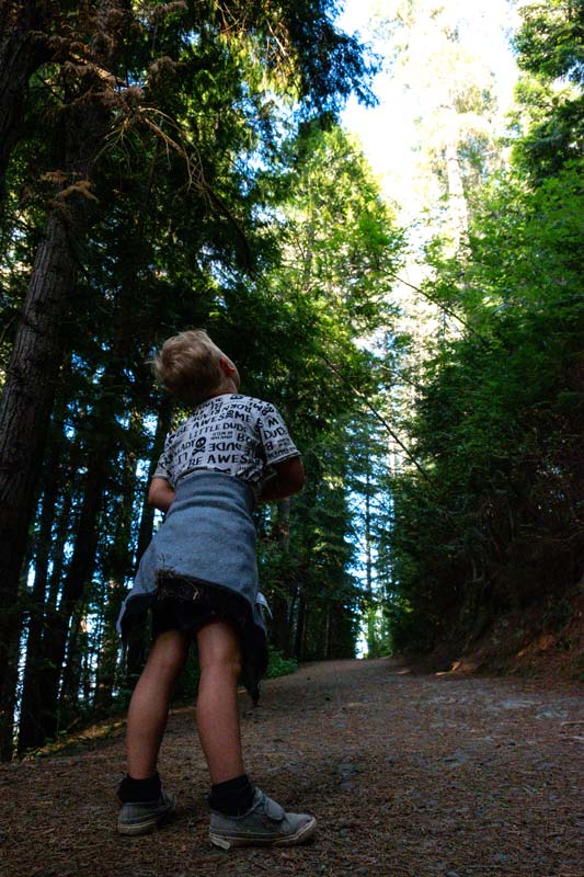 Kipton looks up at the tall trees in the forest on the Conical Hill Walk