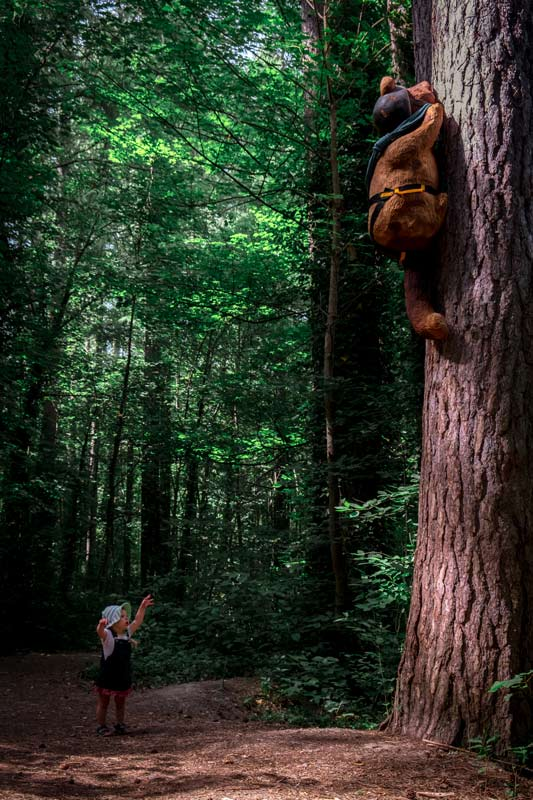 Wee 18 month old Emilia spots a bear climbing a tree on the Forest Amble Walk