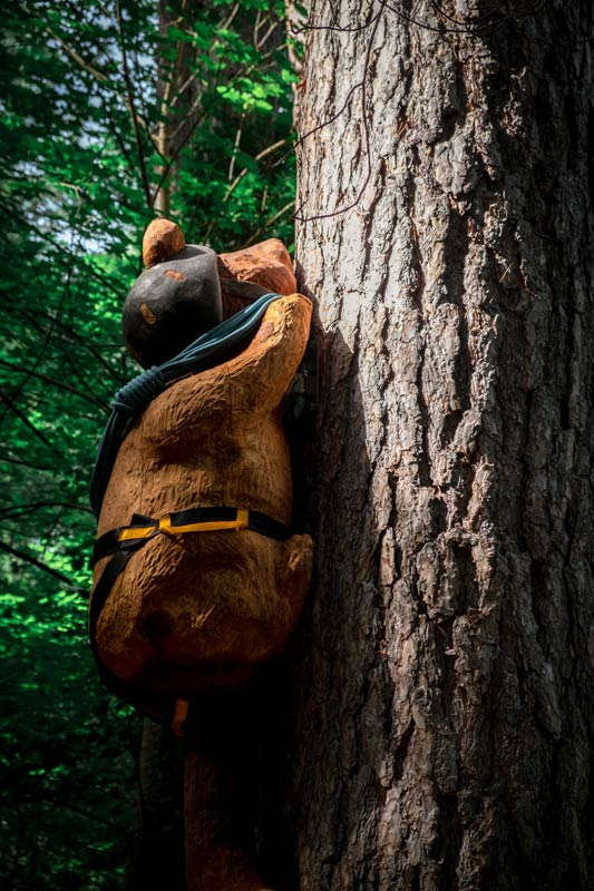 Closeup of wooden sculpted bear with rope and helmet, climbing a tree on the Forest Amble Walk, Canterbury