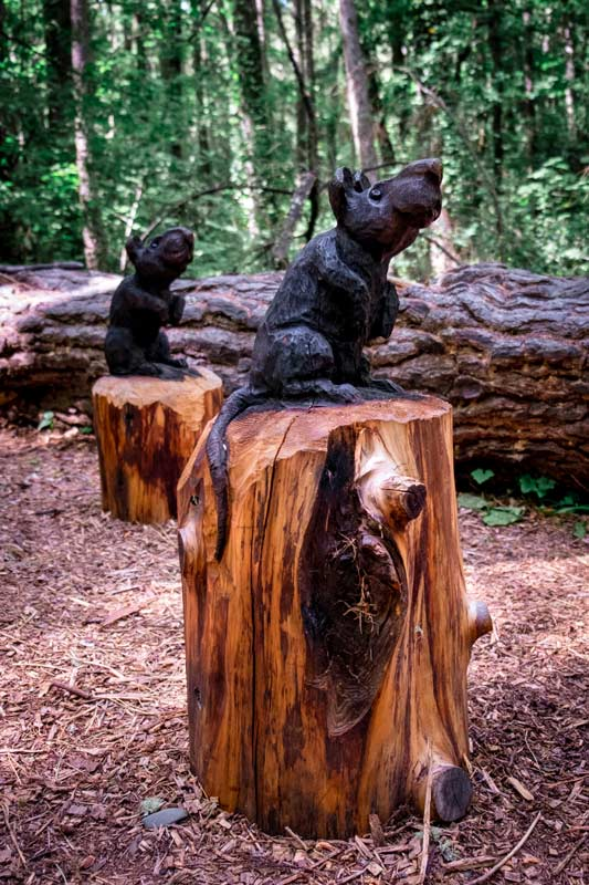 Two wooden rats, sculpted from wood on the art in the forest walk, also known as the Forest Amble Walk in Hanmer Springs