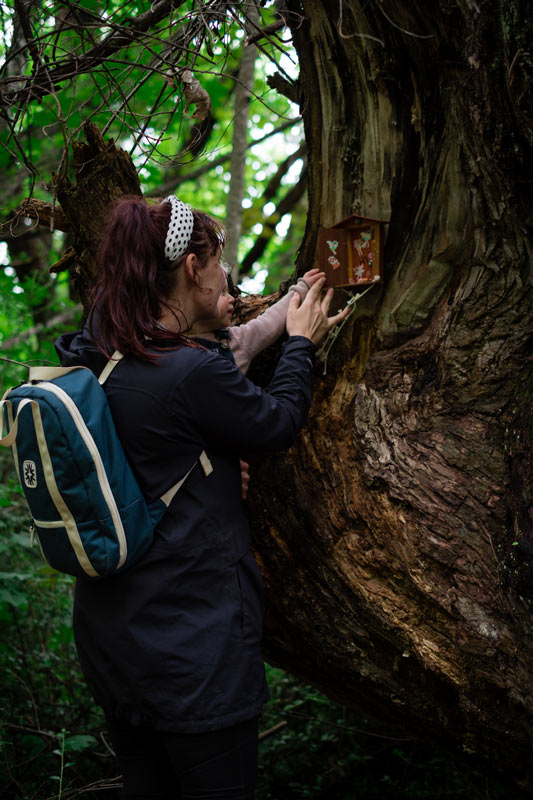 Jen and Emilia from Backyard Travel Family inspects the wooden fairy door up high in the tree in the Hanmer Fairy Door Walk