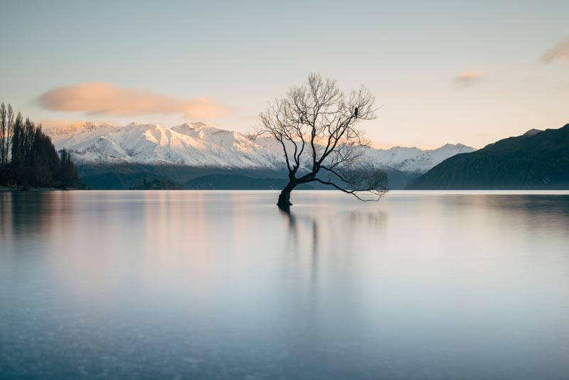 That Wanaka Tree: The beautiful whispy tree that sits in lake Wanaka, half covered in water, with snow capped mountains in behind. One of the most beautiful things you will see on your New Zealand south island road trip itinerary