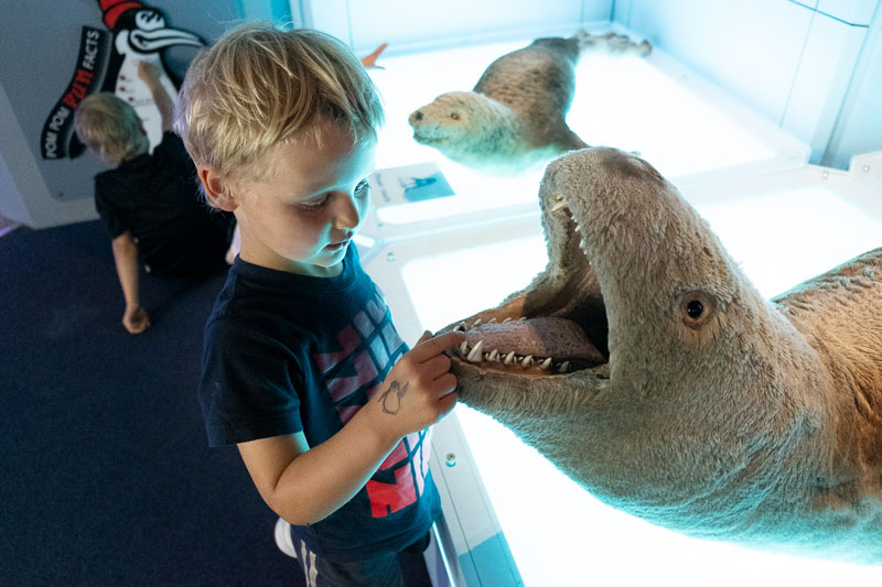 Kipton inspects the teeth of a stuffed seal at the International Antarctic Centre, Christchurch