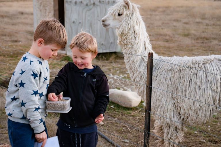 Kipton and Nathan grab alpaca food from a container before they feed the resident alpacas at Highlands Farmstay Twizel