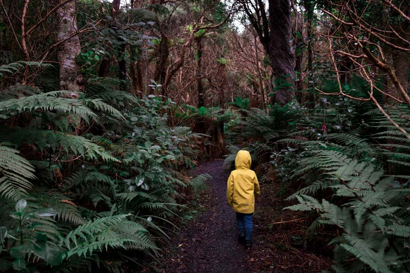 Kipton from Backyard Travel explores the Living Forest, near the Petrified Forest at Curio Bay, Catlins
